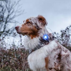 Orbiloc veiligheidslampje LED oplaadbaar hond hondenriem lichtgevende lampje lichtje action lidl