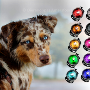 Orbiloc veiligheidslampje lampje lichtje hond lichtgevende halsband tuig oplaadbaar lidl aldi action