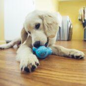 Zogoflex Tux honden speelgoed grote hond