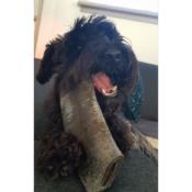Buffelhoorn harde kauwsnack bot hond hondensnack natuurlijk kluif