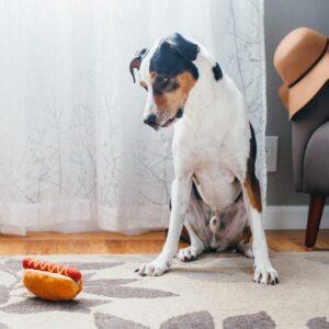 Play Amerikaans eten fastfood patat hamburger kipnugget hondenspeelgoed knuffel