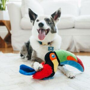 Play tropische vogels toekan hondenspeelgoed knuffel