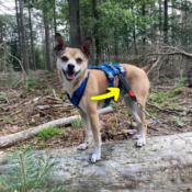 WAW Easy Dog walk anti-trek elastische bungee hondenriem anti shock trekveer met elastiek lijn Schokdemper hond riem met anti-trek tussenstuk halsband tegen trekken Jack Russel