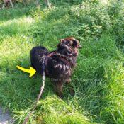 WAW Easy Dog walk anti-trek elastische bungee hondenriem anti shock trekveer met elastiek lijn Schokdemper hond riem met anti-trek tussenstuk halsband tegen trekken rescue hond