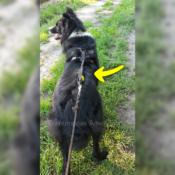 WAW Easy Dog walk anti-trek elastische hondenriem. Bungee anti shock trekveer met elastiek lijn. Schokdemper hond riem met anti-trek tussenstuk halsband tegen trekken border collie