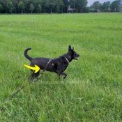 WAW Easy Dog walk anti-trek elastische hondenriem. Bungee anti shock trekveer met elastiek lijn. Schokdemper hond riem met anti-trek tussenstuk halsband tegen trekken herdershond