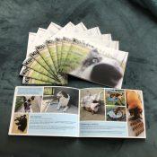 Kijk eens boek Amber Kempers hondenlichaamstaal honden lichaamstaal hond Turid Rugaas