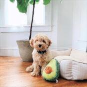 Zippypaws Zippy paws avocado knuffel hond honden