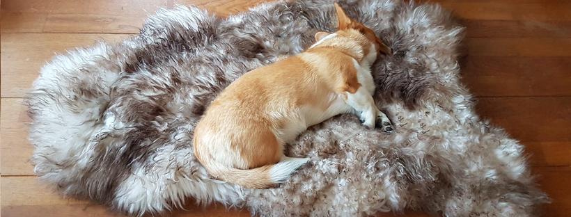 Schapenvacht vacht vachtje hond honden mouflon artrose