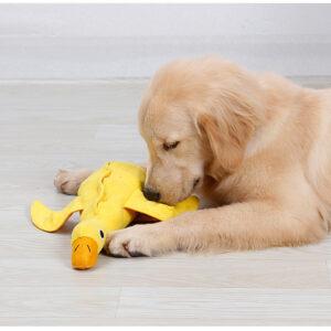 Verstop knuffel eend zoekspel mentaal moe maken hond hersenwerk