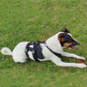 AnnyX Anny-X Safety Harnass Harness tuigje anti-ontsnappingstuig hond veiligheidstuig buitenlandse hond