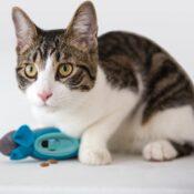 Doc & Phoebe's Indoor Hunting Cat Feeder Voermuisjes voor katten kittens kat