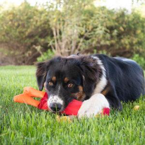 Hozies hondenspeelgoed brandweerslang brandweer slang sterk stevig speelgoed
