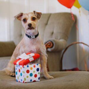 Play hondenspeelgoed knuffel Party box feestje taart cadeau