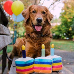 Play hondenspeelgoed knuffel Party box feestje taart