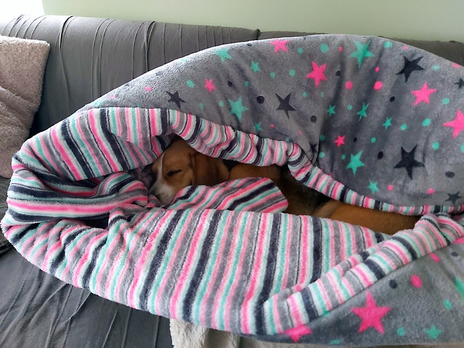 Slaapzak hond hondenslaapzak groot grote hond klein puppy beagle