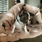 Slaapzak hond hondenslaapzak groot grote hond klein puppy franse bulldog frenchie