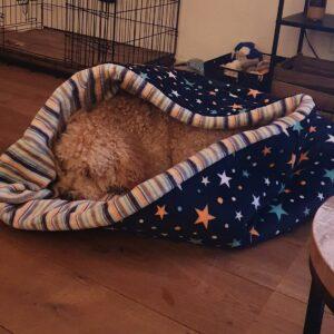 Slaapzak hond hondenslaapzak groot grote hond klein puppy labradoodle