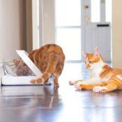 Surefeed Sure feed automatische voerbak kattenbakje op chip microchip kat